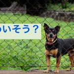 dog-2226136_640