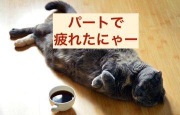 cat-1351612_640