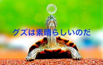 animal-1868436_640